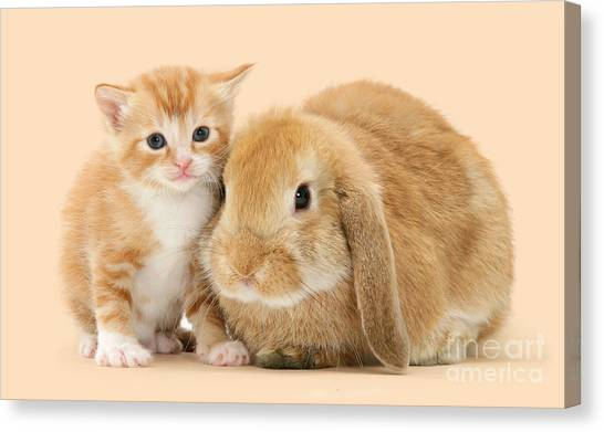 Ginger Kitten And Sandy Bunny Canvas Print