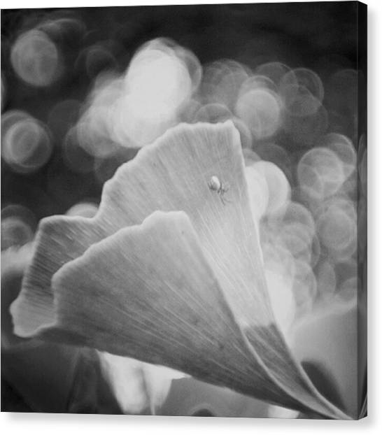 Spiders Canvas Print - Ginkgo Biloba  #blackandwhite #bw by Mandy Tabatt