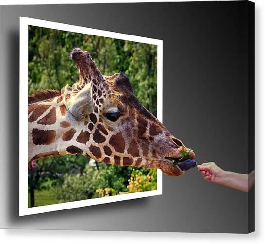 Giraffe Feeding Out Of Frame Canvas Print