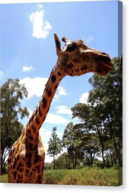 Explorason Canvas Print - Giraffe Getting Personal 3 by Exploramum Exploramum