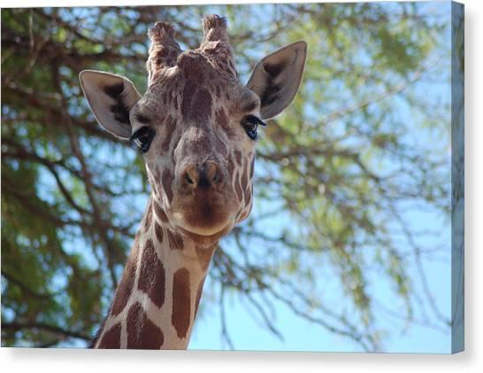 Canvas Print - Giraffe I by Susan Heller