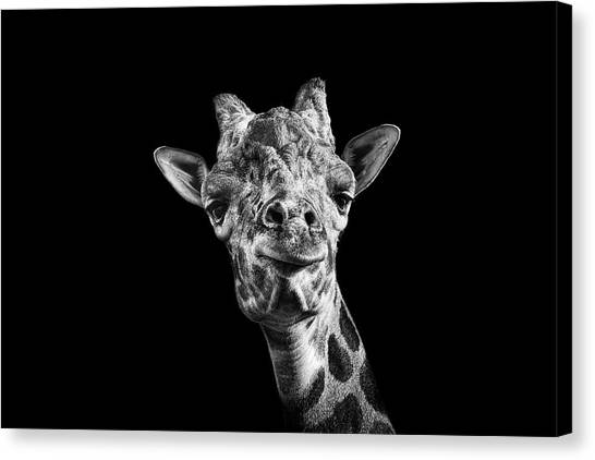 Giraffes Canvas Print - Giraffe In Black And White by Malcolm MacGregor