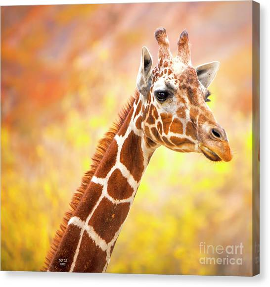 Giraffe, Animal Decor, Nursery Decor,  Canvas Print