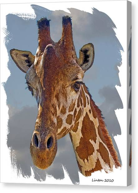 Giraffe Canvas Print by Larry Linton