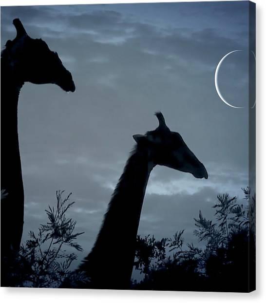 Giraffe Moon  Canvas Print