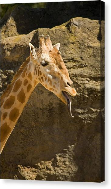 Raspberries Canvas Print - Giraffe Raspberry by Mike  Dawson
