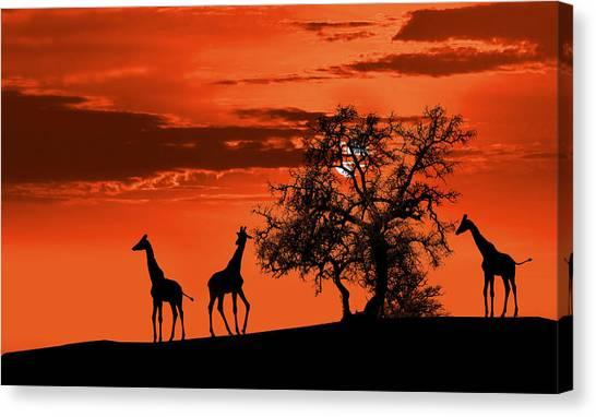 Southern Africa Canvas Print - Giraffes At Sunset by Jaroslaw Grudzinski