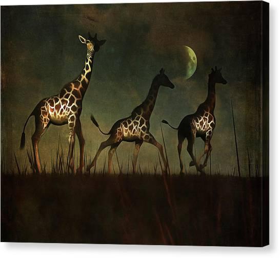 Giraffes Fleeing Canvas Print