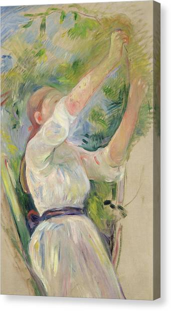 Sun Belt Canvas Print - Girl Gathering Cherries by Berthe Morisot