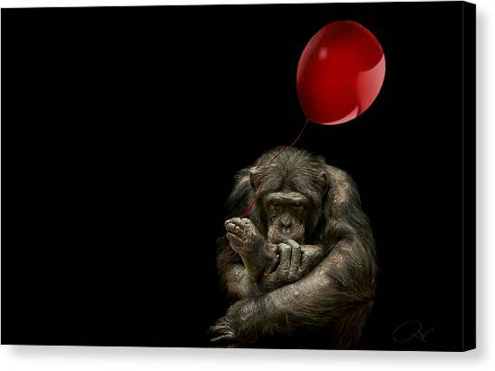 Chimpanzees Canvas Print - Girl With Red Balloon by Paul Neville