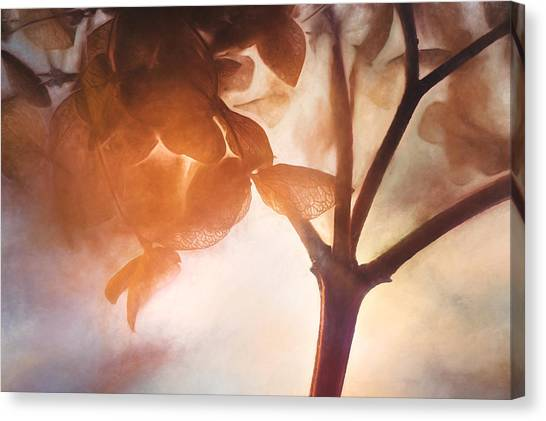 Impression Canvas Print - Give Thanks For The Light by Scott Norris