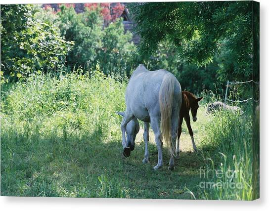 Giverny Mare And Foal Landscape Canvas Print by Nadine Rippelmeyer