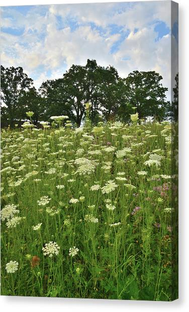 Prairie Sunrises Canvas Print - Glacial Park Queen Anne's Lace by Ray Mathis