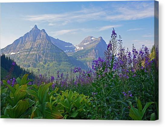 Glacier National Park Fireweed Canvas Print