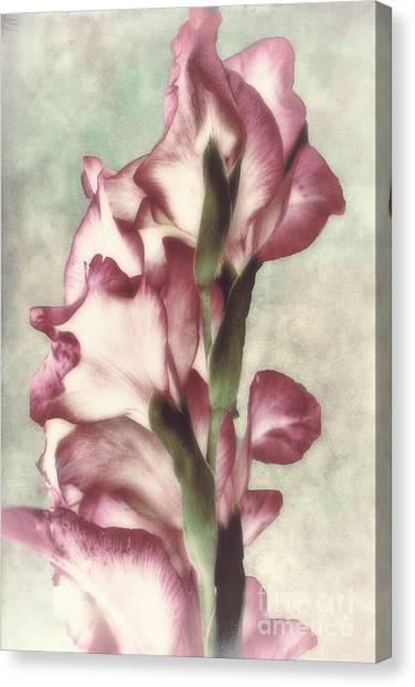 Gladiolas Canvas Print - Gladiola by Mindy Sommers