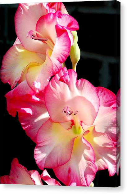 Gladiolas Canvas Print by Tony Ramos