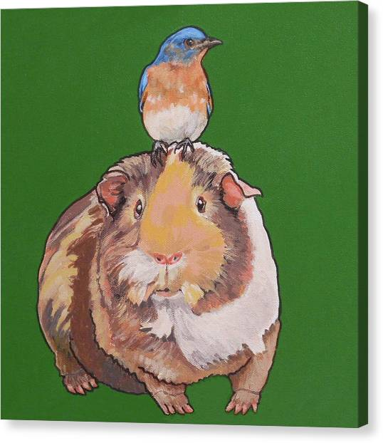Gladys The Guinea Pig Canvas Print