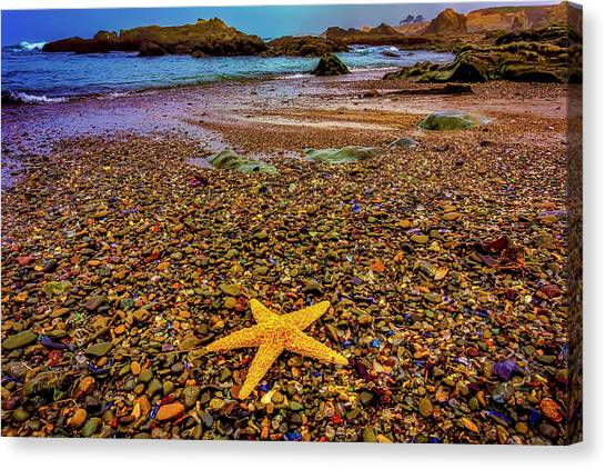 Saltwater Life Canvas Print - Glass Beach Starfish by Garry Gay