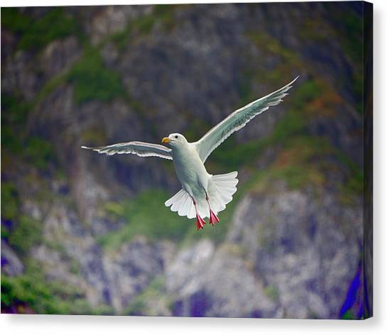 Glaucous-winged Gull Canvas Print