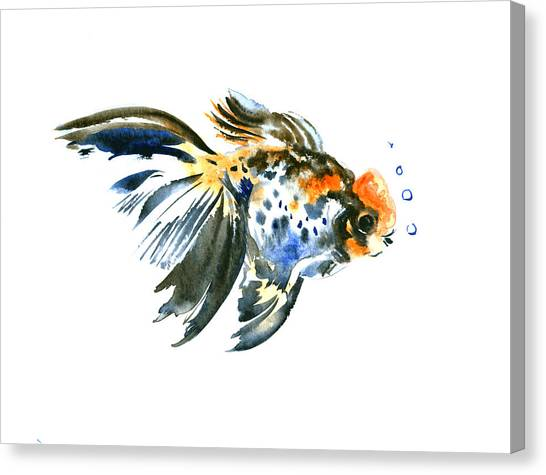 Goldfish Canvas Print - Goldfish by Suren Nersisyan