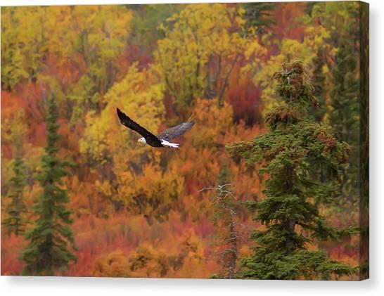 Eagle In Flight Canvas Print - Glide Path by Ed Boudreau