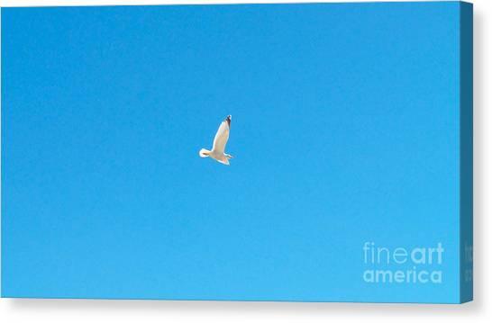 Gliding Seagull Canvas Print