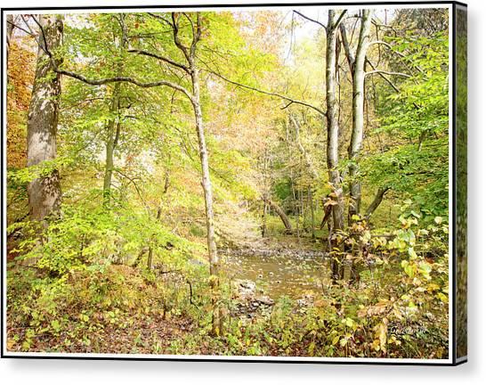 Glimpse Of A Stream In Autumn Canvas Print