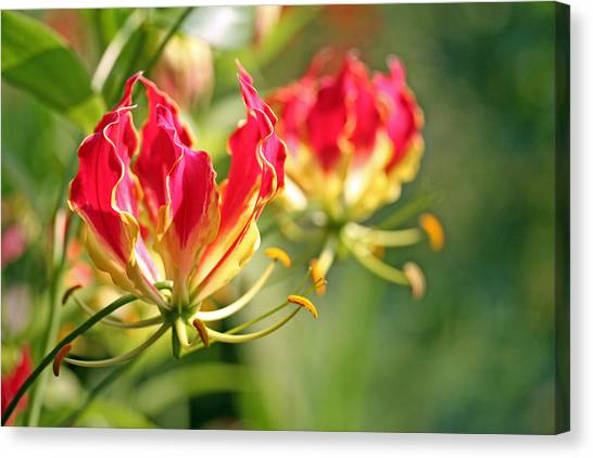 Gloriosa Flame Canvas Print