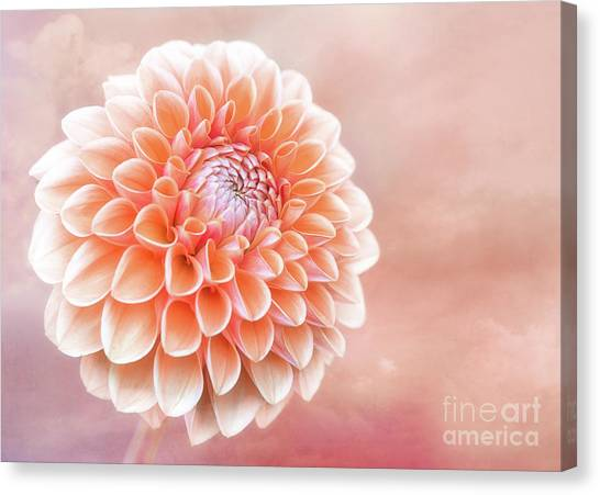 Glorious Salmon Dahlia Canvas Print