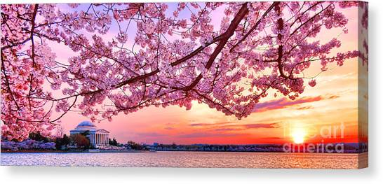 Jefferson Memorial Canvas Print - Glorious Sunset Over Cherry Tree At The Jefferson Memorial  by Olivier Le Queinec