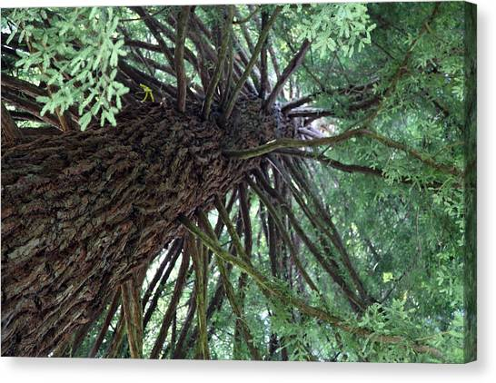 Glorious Tree  Canvas Print