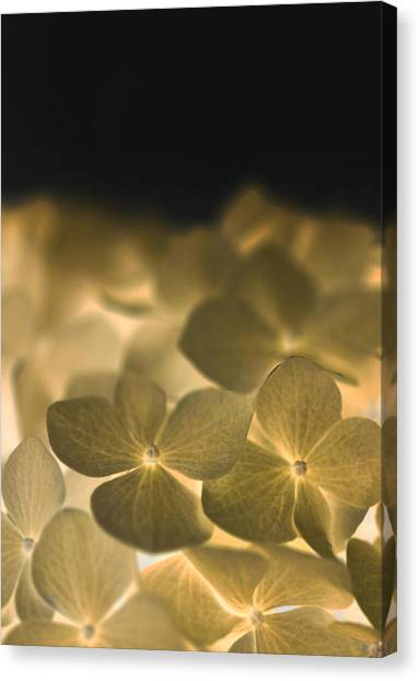 Glow Blossoms Canvas Print