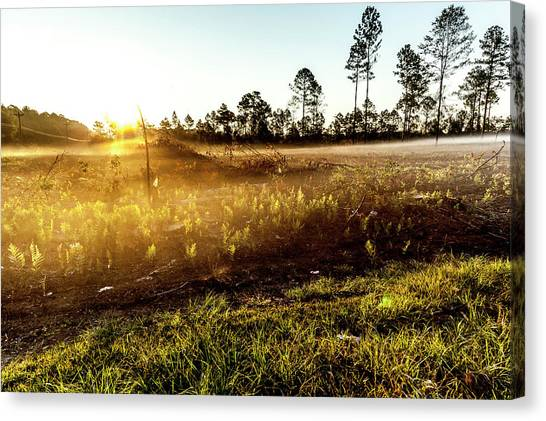 Canvas Print featuring the photograph Glow by Eric Christopher Jackson