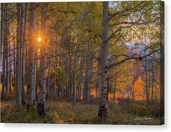 Glowing Aspen, La Sal Mountains Canvas Print