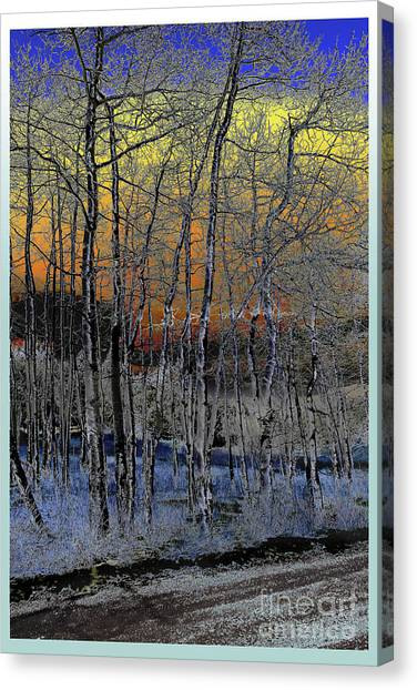 Glowing Aspens At Dusk Canvas Print