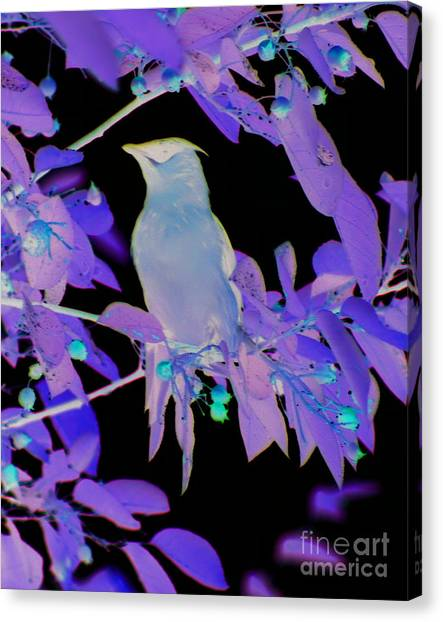 Glowing Cedar Waxwing Canvas Print