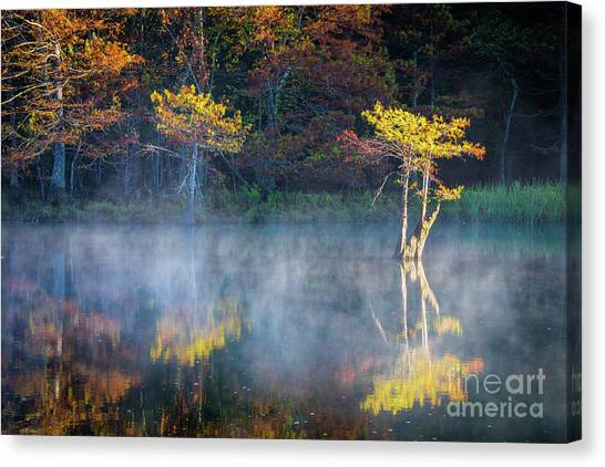 Beaver Canvas Print - Glowing Cypresses by Inge Johnsson