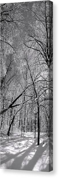 Glowing Forest, Knoch Knolls Park, Naperville Il Canvas Print