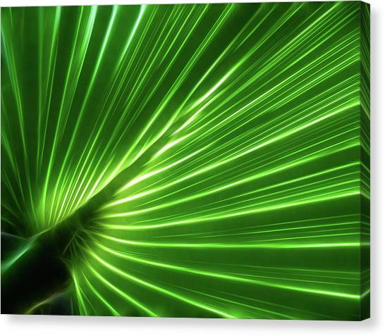 Glowing Palm Canvas Print