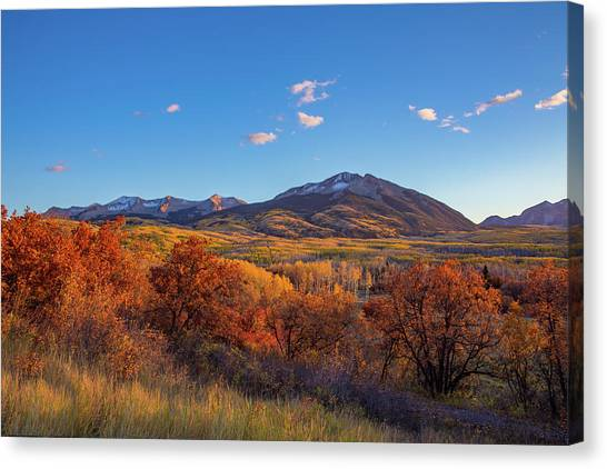 Mountain West Canvas Print - Glowing Red Gambel Oak Outshines The Golden Aspen Forest In Colorado by Bridget Calip