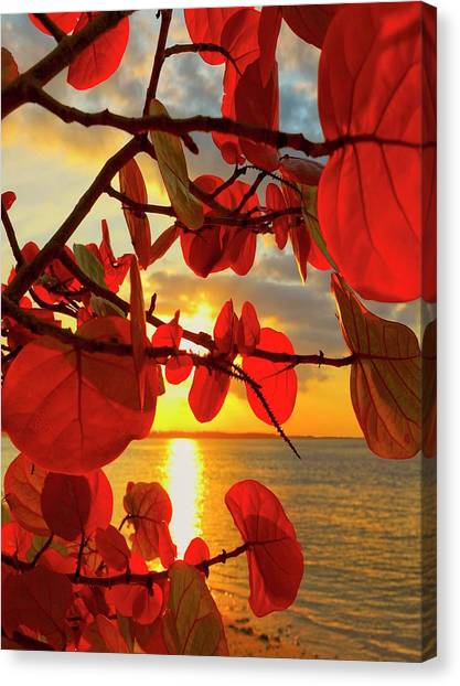 Foliage Canvas Print - Glowing Red by Stephen Anderson