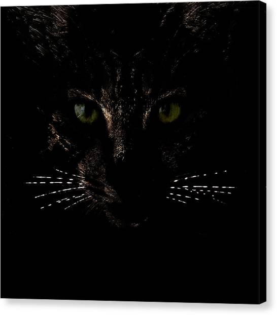 Glowing Whiskers Canvas Print