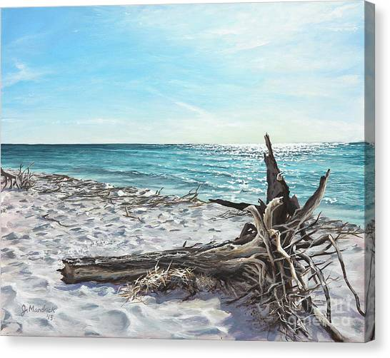 Gnarled Drift Wood Canvas Print