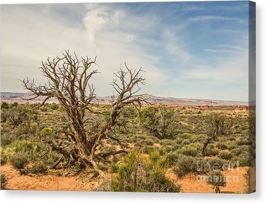Gnarled Juniper Tree In Arches Canvas Print