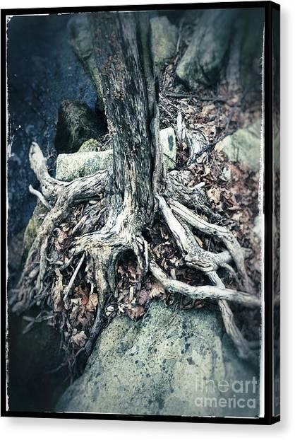 Gnarled Rooted Beauty Canvas Print