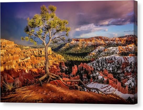 Gnarled Tree At Bryce Canyon Canvas Print