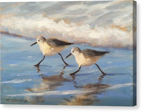 Go Sandpipers Canvas Print by Tina Obrien