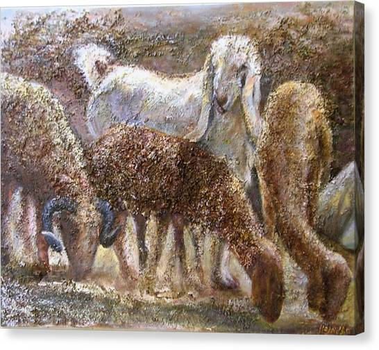 Goat With Sheep Canvas Print by Sylva Zalmanson