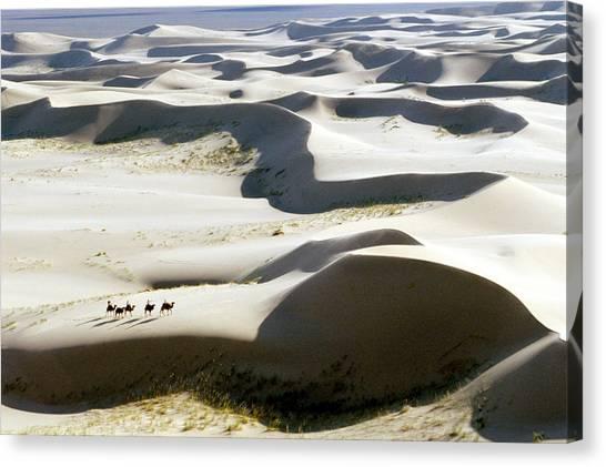 Gobi Desert Canvas Print - Gobi Desert by Ria Novosti