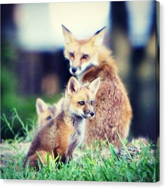 Small Mammals Canvas Print - God's Beautiful Creation #fox by Joan McCool